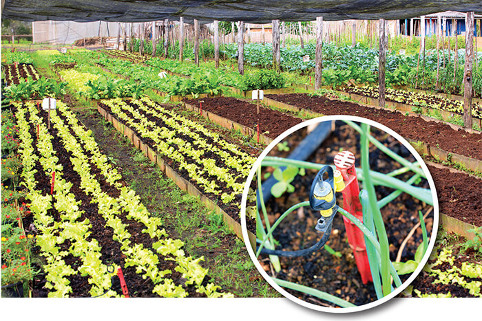 Mini-sprinklers irrigate onions and other produce on a raised bed under shade cloth