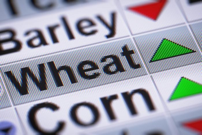 Chicago wheat
