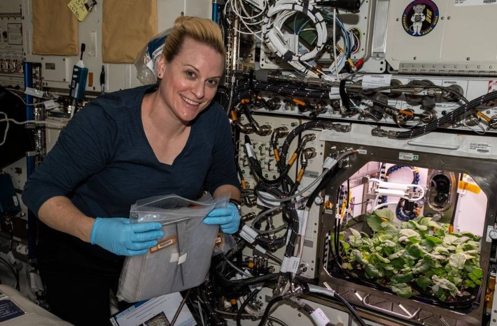 NASA harvests radishes