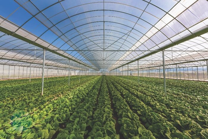 With microirrigation, indoor production allows growers to avoid environmental challenges and produce more.
